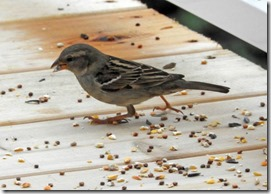 Bird and seeds